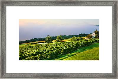 Hillside Vineyard Framed Print by Steven Ainsworth