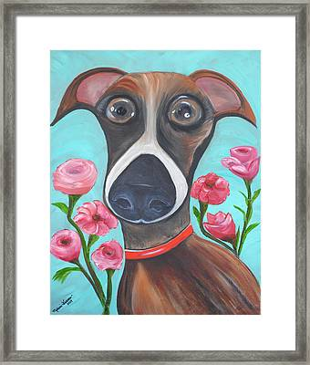 Hooper Icon For Shelter Dogs Framed Print by Melanie Wadman