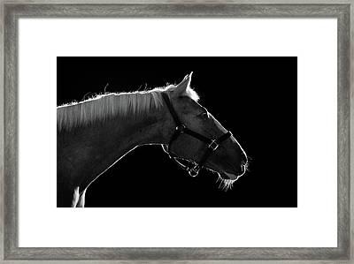 Horse Framed Print by Arman Zhenikeyev - professional photographer from Kazakhstan