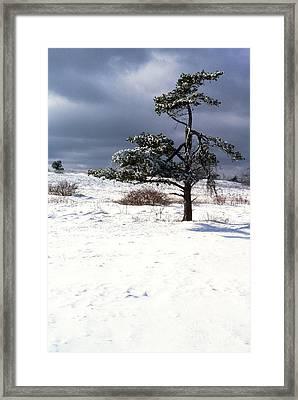 Iced Tree Shenandoah National Park Framed Print by Thomas R Fletcher