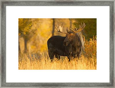 In The Gloaming Framed Print by Sandy Sisti