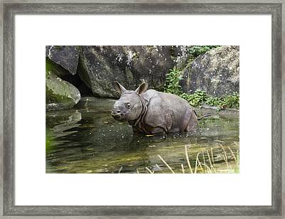 Indian Rhinoceros Rhinoceros Unicornis Framed Print by Konrad Wothe