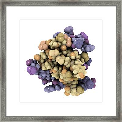 Insulin Molecule Framed Print by Laguna Design