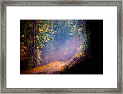 Into The Light Framed Print by Donna Duckworth