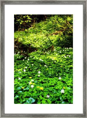 Irish Fairy Glen Framed Print by Stephen Douglas