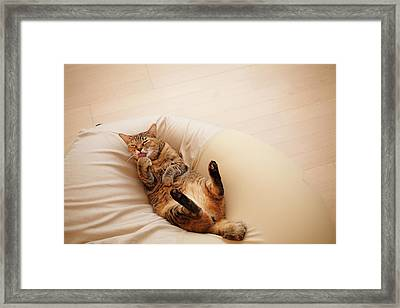 Japanese Cat Framed Print by Junku