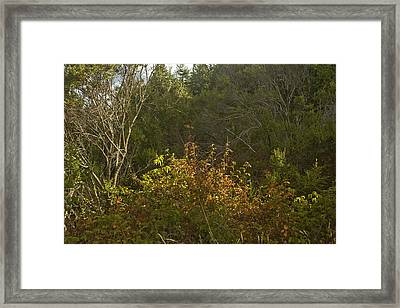 Last Of The Poison Oak Framed Print by Larry Darnell