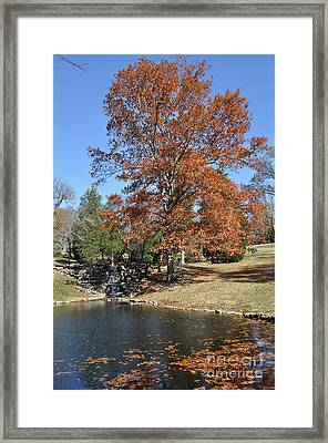Leaves In The Water Framed Print by Denise Ellis