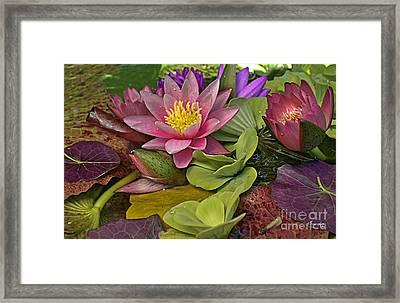 Lilies No. 33 Framed Print by Anne Klar