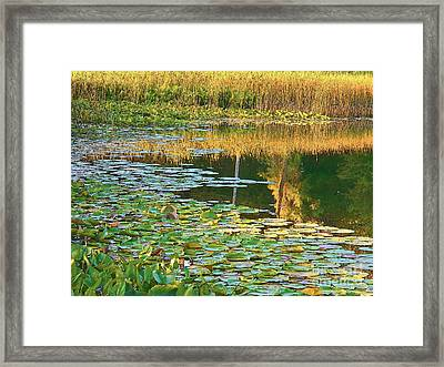Lily Pads On The Lake Framed Print by Joyce Kimble Smith