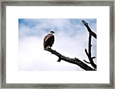 Lonely Sentenel Framed Print by Don Mann