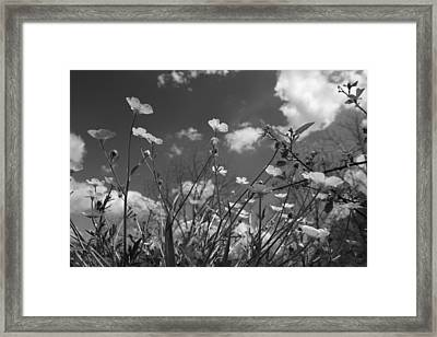 Looking Up  Framed Print by Betsy Knapp