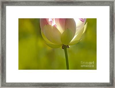 Lotus Detail Framed Print by Heiko Koehrer-Wagner