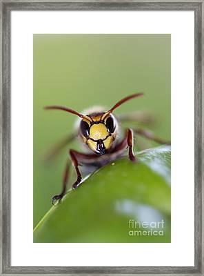 Mandibles Framed Print by Michal Boubin