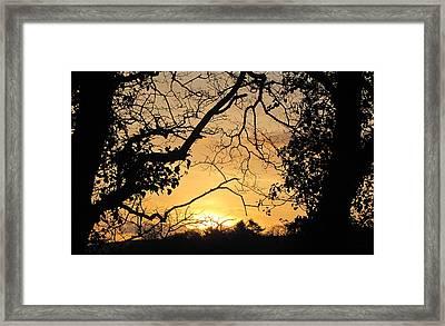 Morning In Ireland Framed Print by Barbara Walsh
