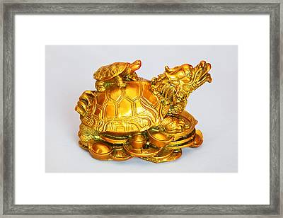 Mother Turtoise And Baby On Back Framed Print by Kantilal Patel
