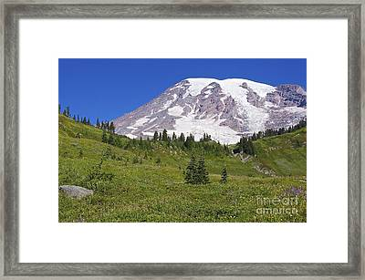 Mount Rainier Meadow Framed Print by Sean Griffin