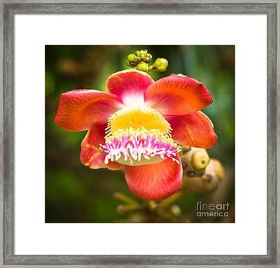 Natural Beauty Framed Print by Melle Varoy