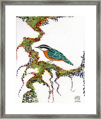 Nuthatch Two Framed Print by Alexandra  Sanders