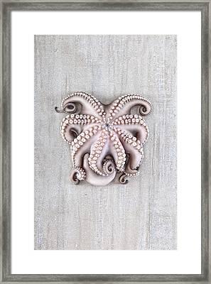 Octopus Framed Print by Fausto Favetta Photoghrapher