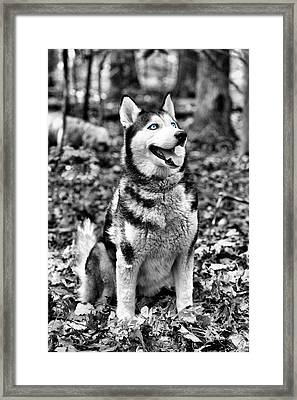 Ole Blue Eyes Framed Print by JC Findley