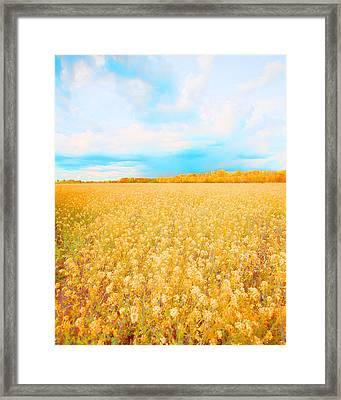 On A Clear Day Framed Print by Bonnie Bruno