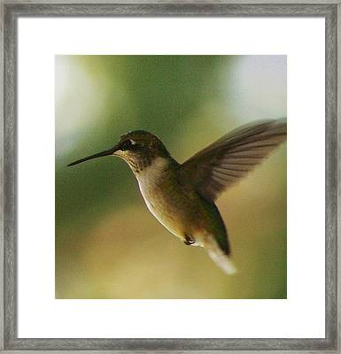 On The Fly Framed Print by Bruce Bley