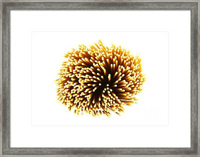 Pasta Framed Print by Blink Images