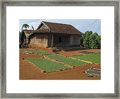 Pepper Cultivation, Vietnam Framed Print by Bjorn Svensson