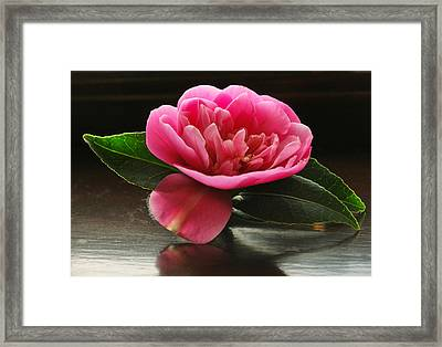 Pink Camellia Framed Print by Terence Davis
