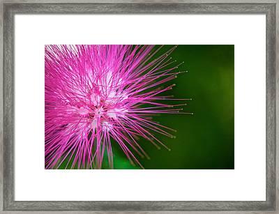 Pink Flower Framed Print by Jack Scicluna