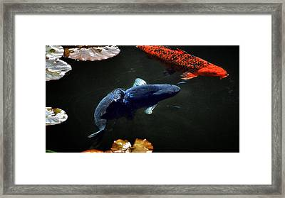 Playing Koi Framed Print by Don Mann