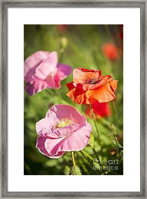 Poppies In A Garden Framed Print by Elena Elisseeva