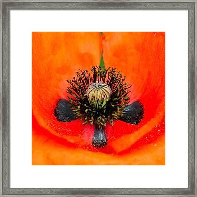 Poppy Heart Framed Print by Karon Melillo DeVega