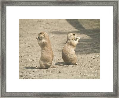 Prairie Dog Framed Print by Odon Czintos