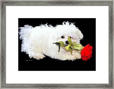 Precious....... Framed Print by Tanya Tanski