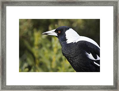 Priestly  Framed Print by Douglas Barnard