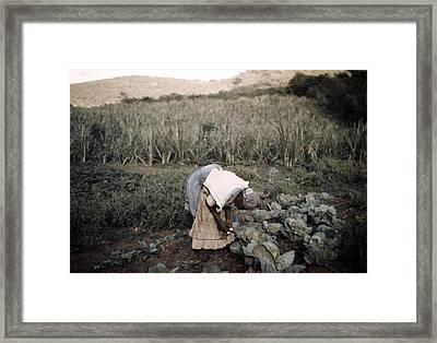 Puerto Rico. Tenant Farmer Framed Print by Everett