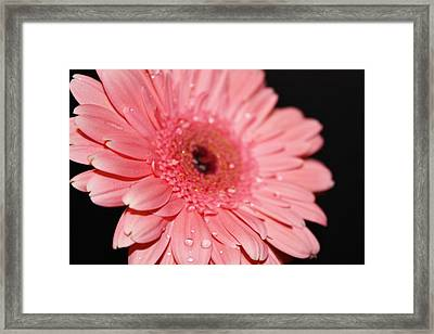 Rain Drops Framed Print by Cathie Tyler