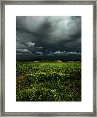 Rain Framed Print by Phil Koch