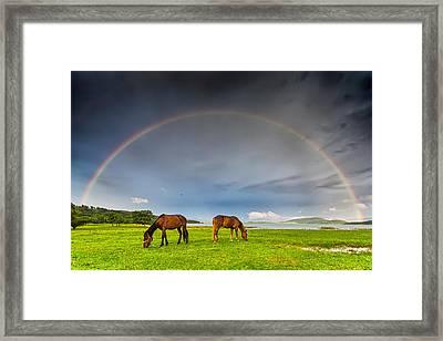 Rainbow Horses Framed Print by Evgeni Dinev