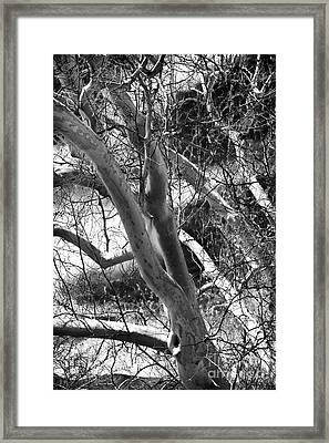 Reaching Out Framed Print by John Rizzuto