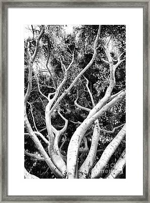 Reaching Up Framed Print by John Rizzuto