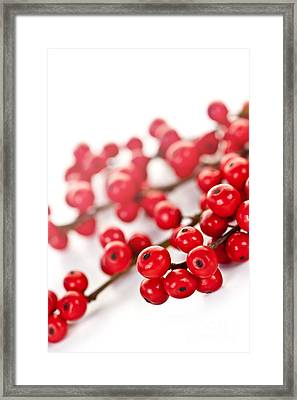 Red Christmas Berries Framed Print by Elena Elisseeva