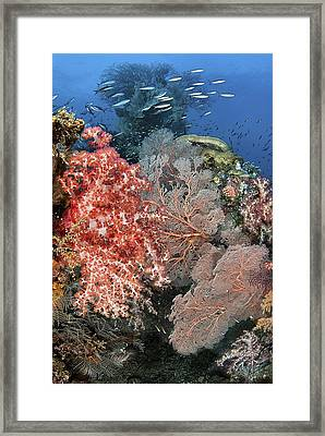 Reef Scenic With Schooling Fusiliers Framed Print by Jones/Shimlock-Secret Sea Visions