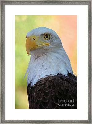 Regal Eagle Framed Print by Linda Eshom