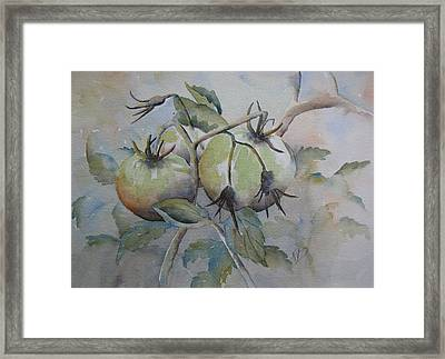 Ripening On The Vine Framed Print by Ramona Kraemer-Dobson
