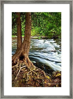 River Through Woods Framed Print by Elena Elisseeva