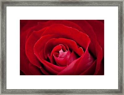 Rose Framed Print by Alhaji Samura