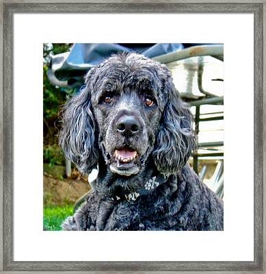 Rudy Framed Print by Dennis Dugan